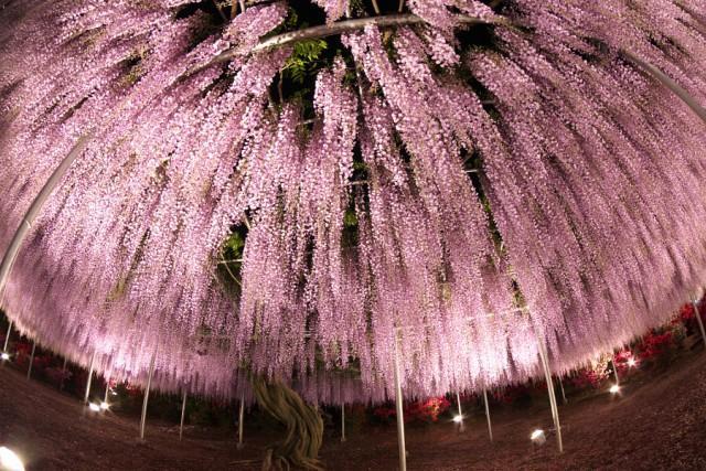 Одно из самых прекрасных растений на планете (31 фото)