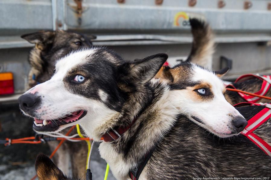 25. А это Ким — владелец этих прекрасных собак, которые нас прокатили по норвежской тундре.