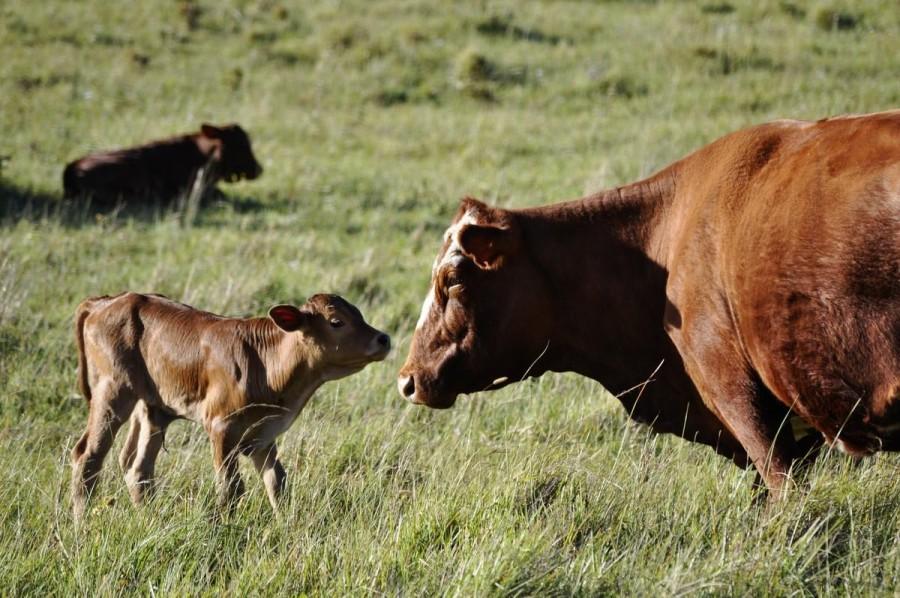 1. Намибия В этой южноафриканской стране местные жители для борьбы с похмельем используют молоко буй