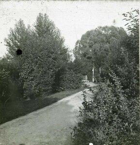 Аллея в Карякинском саду