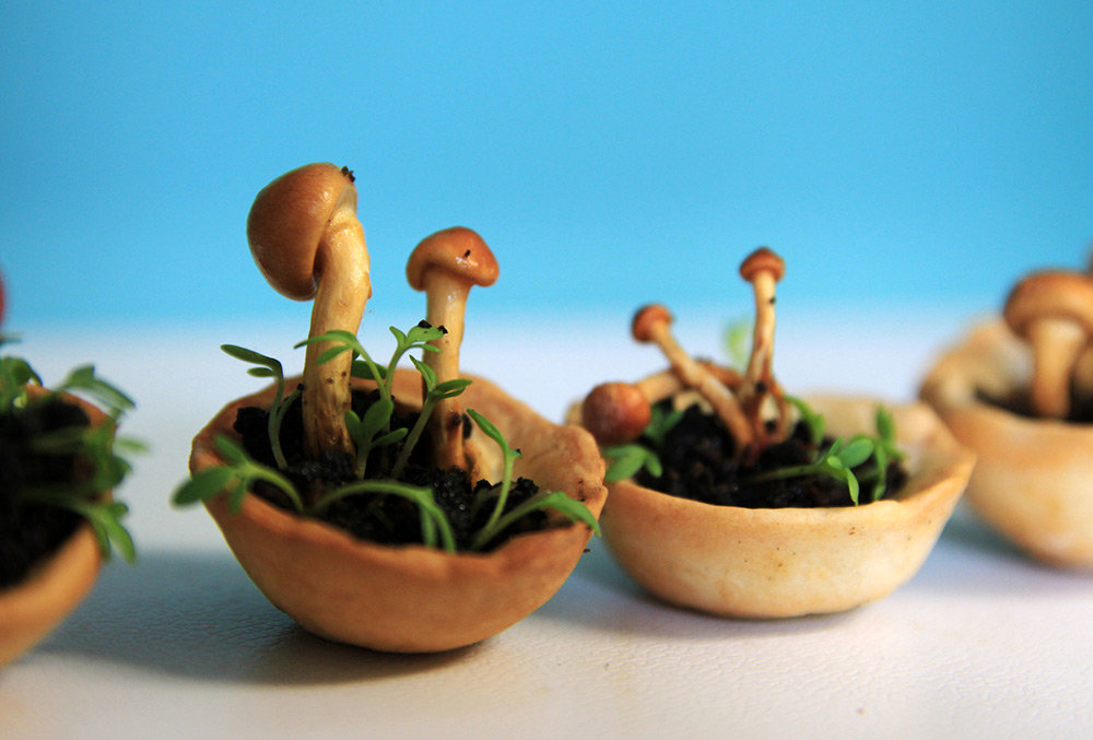 Edible Growth: 3D-Printed Living Food That Grows before You Eat It