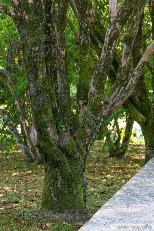 Дерево с замшелым стволом