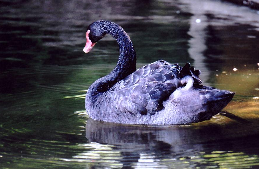 Screenshot_3.png