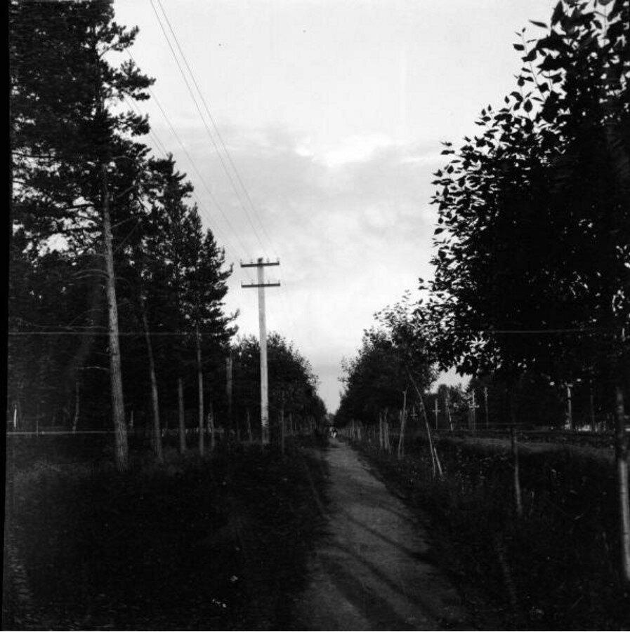 1904. Томилино. Дорога
