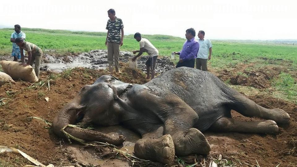 Непростая это работа вытащить слона из болота