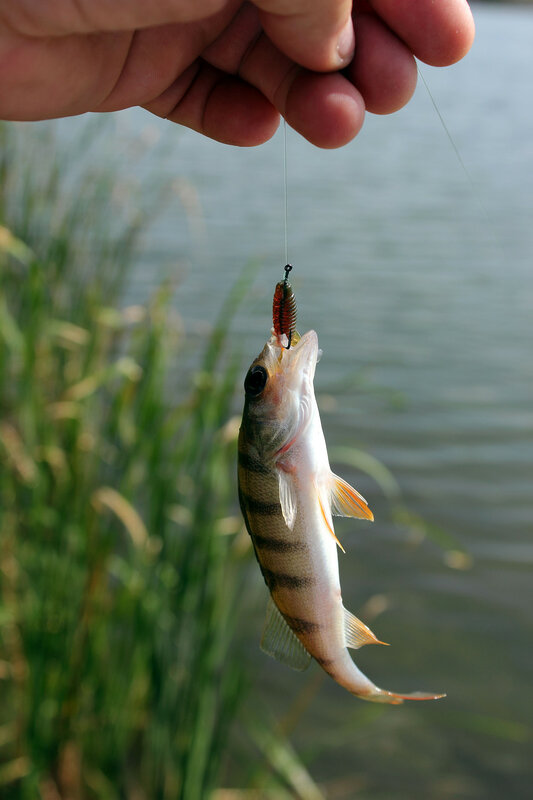 прогноз на рыбалку новошахтинск