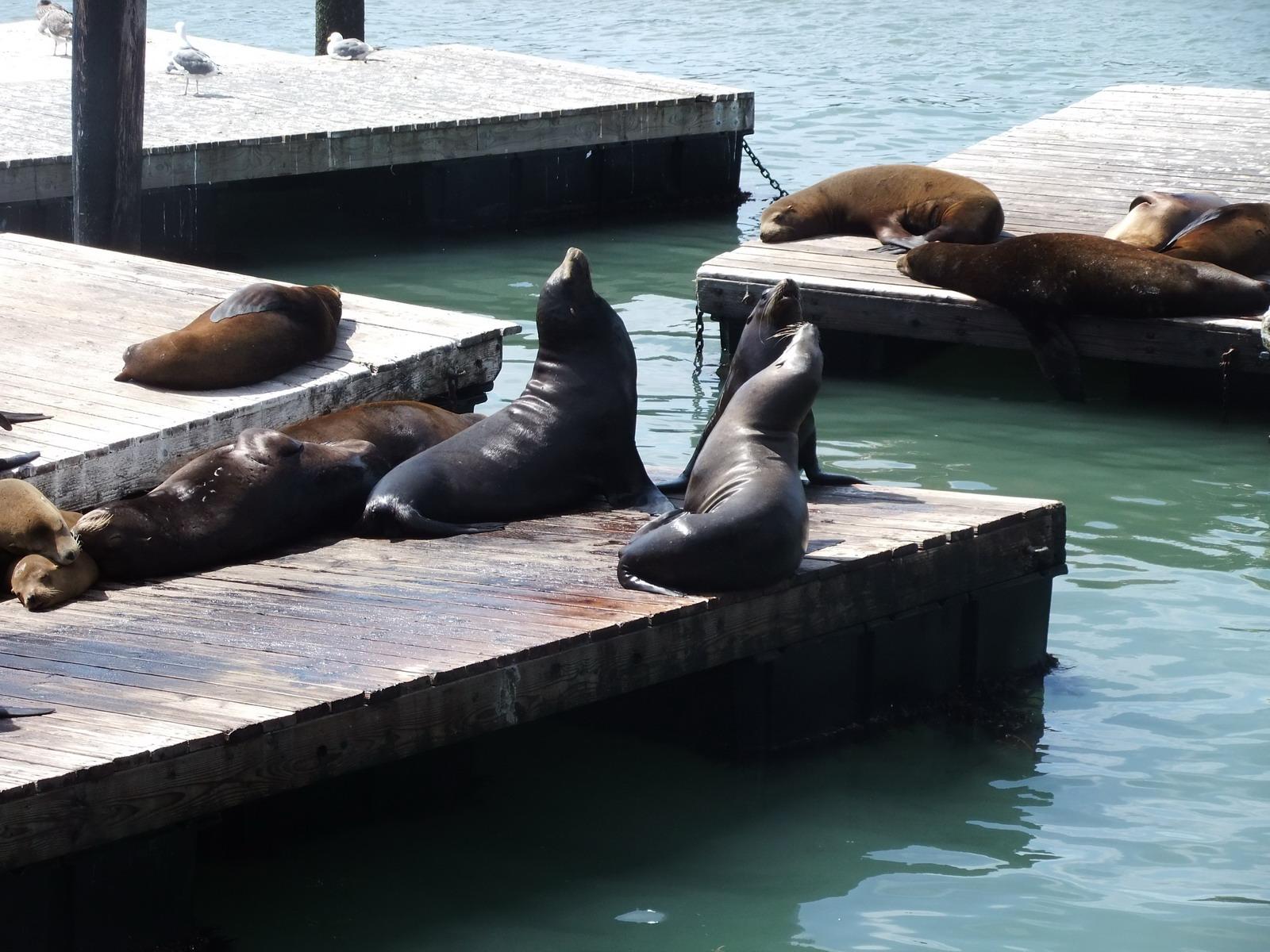 Каждый год морская пристань под названием Мох наполняется этими животными, которые облюбовали это ме