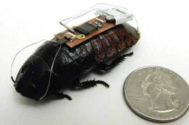 Ученые разрабатывают бионические средства для насекомых, благодаря которым ими можно будет управлять