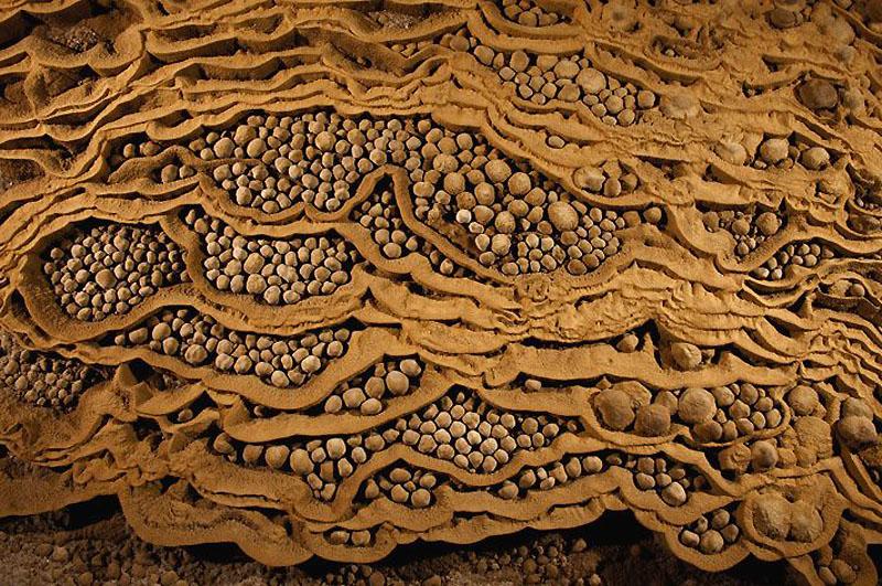 10. Небольшие углубления в известняке забиты пещерным жемчугом. Этот редкий вид жемчуга растет сам п