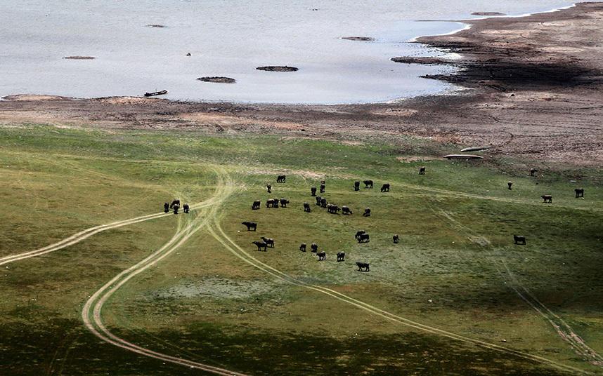 11. В пострадавшем от засухи регионе буйволов приходится выпасать вниз по течению от плотины Ламтако
