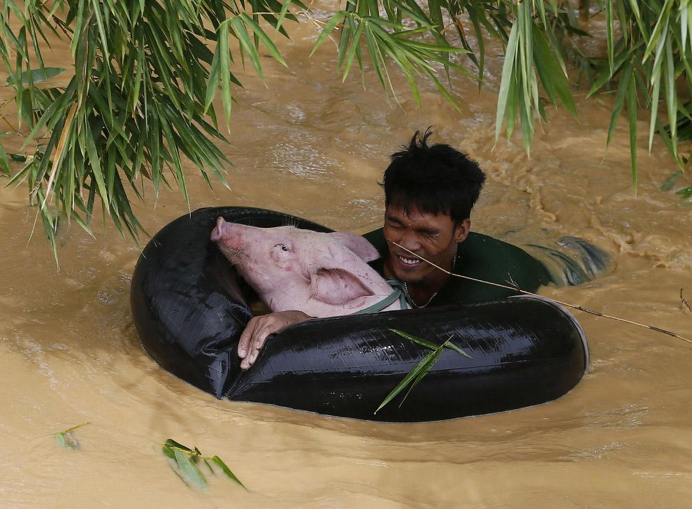 Самое ценное. Хозяин перевозит свою свинюху на автомобильной камере в безлопастное место. В Маниле, Филиппины было наводнение, 19 октября 2015. (Фото Bullit Marquez)