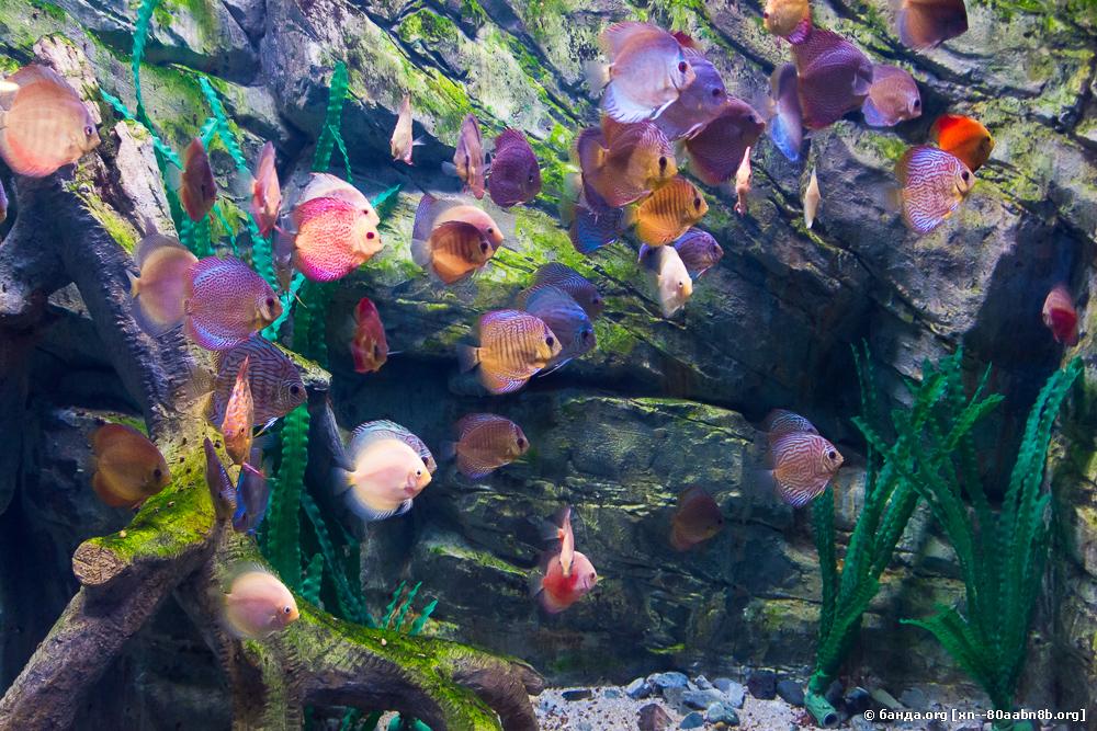 Сочинский аквариум. Адлер