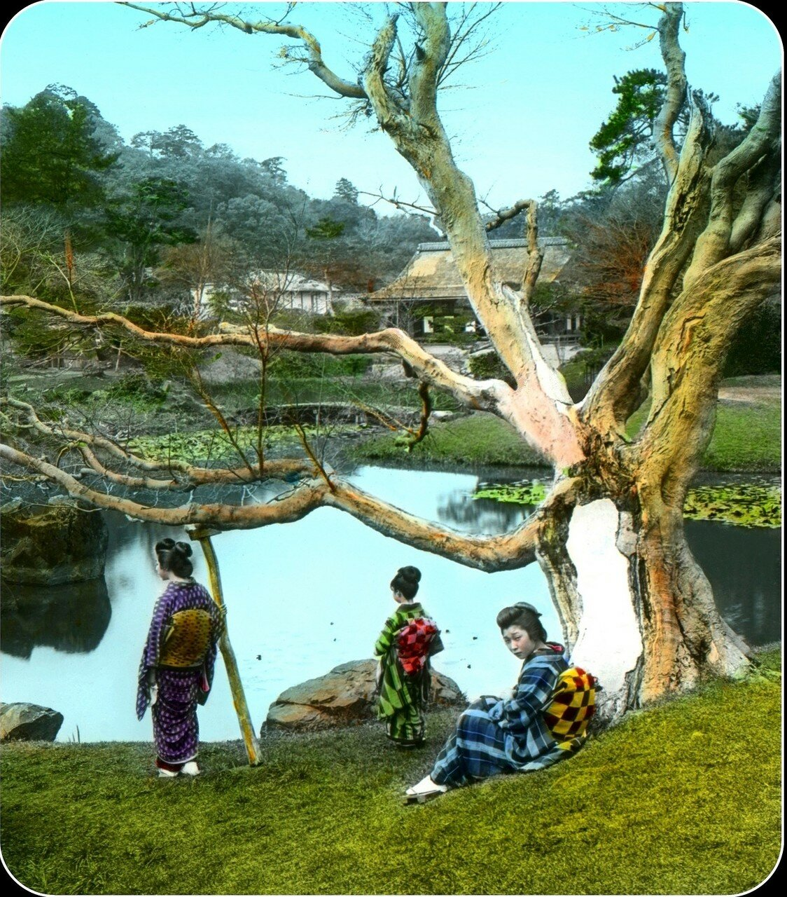 Хиконе. Гейши смотрят на черепах а пруду парка