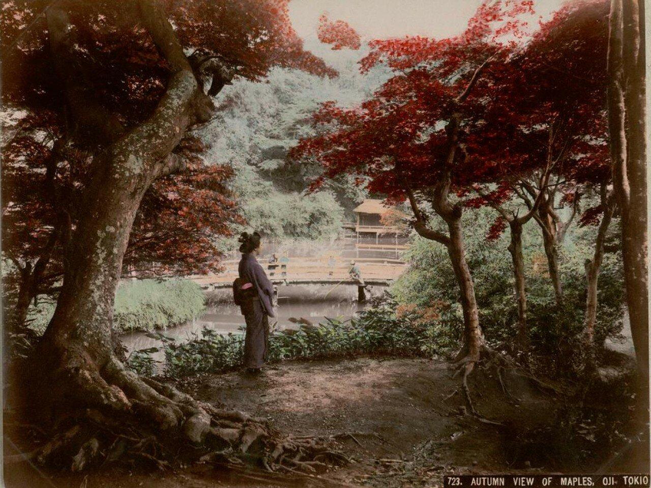 Токио. Оджи. Осенний вид кленов