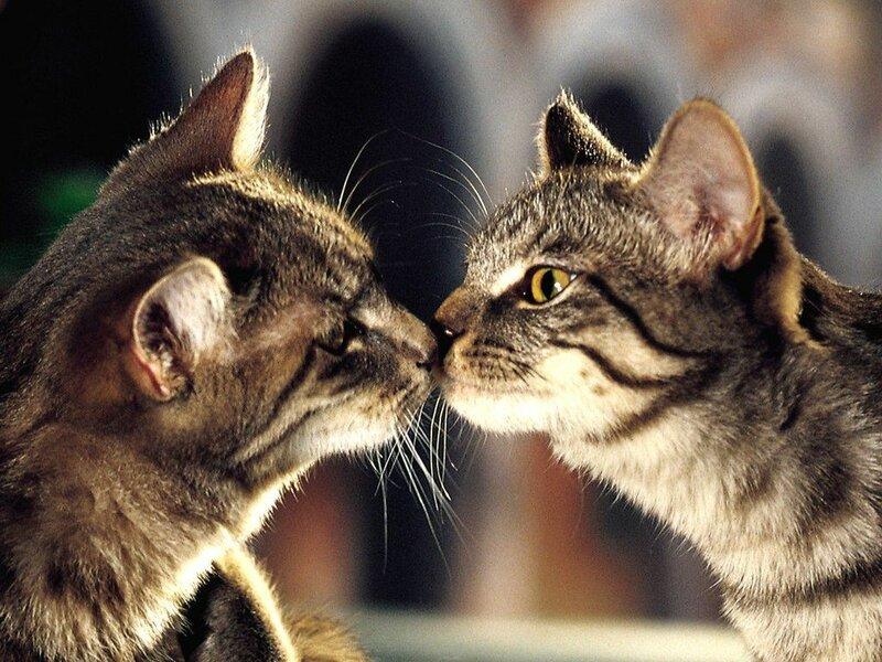 две кошки в доме