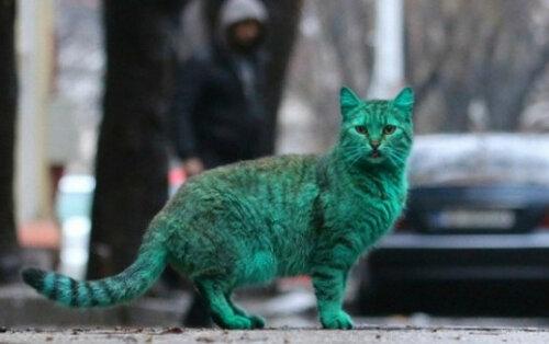 зеленый кот.jpg