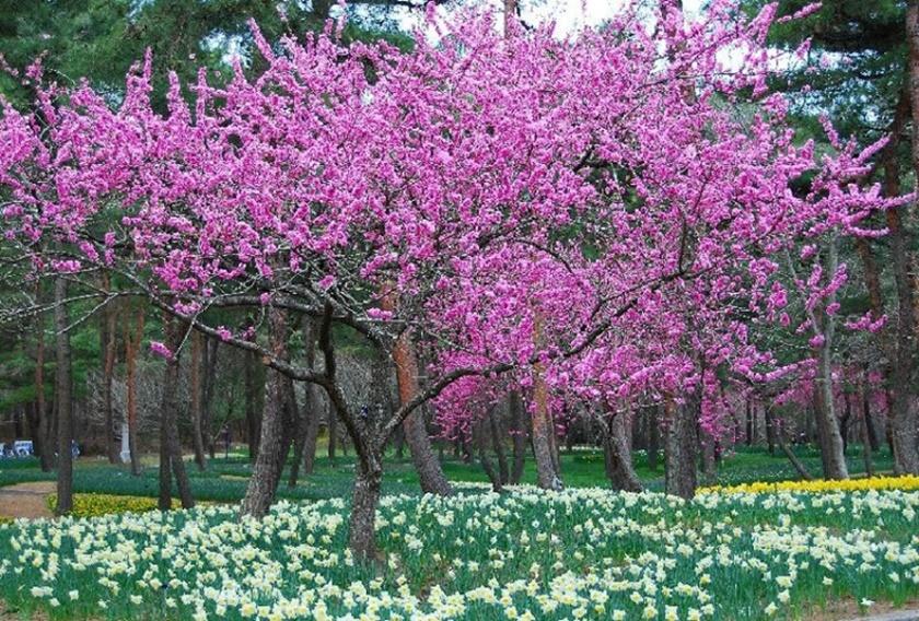 Живописный японский парк Хитати Кайхин 0 1422de 59c1948d orig