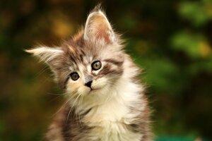 Котенок 3.JPG
