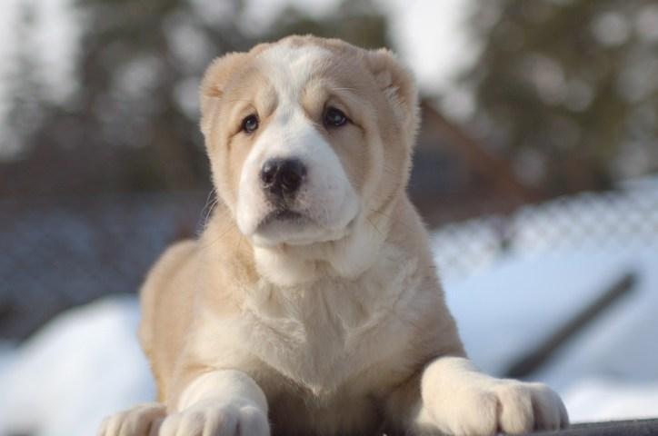 Красивые и добрые собаки 0_106ea0_6304ca94_orig