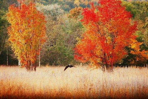 Осень в Эстонии