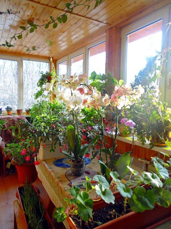 Цветёт наш зимний райский садик