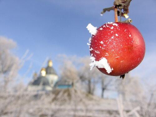 райське яблучко