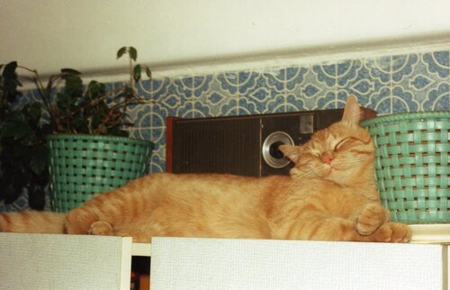 KutinDimon — «кот подпирающий горшок» на Яндекс.Фотках