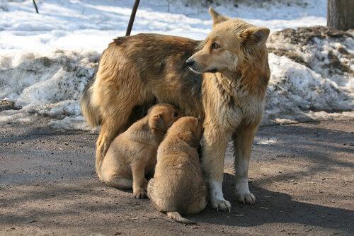 http://img-fotki.yandex.ru/get/11/marina-mashulya.f/0_3ff03_19efee60_L.jpg