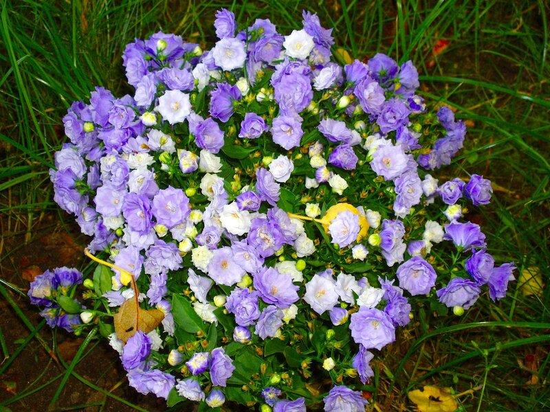 цветы фото жених и невеста