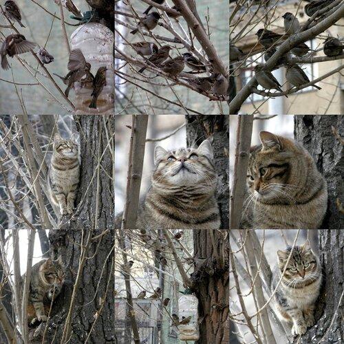 а на соседнем дереве...