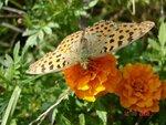 Бабочки и букашки таракашки