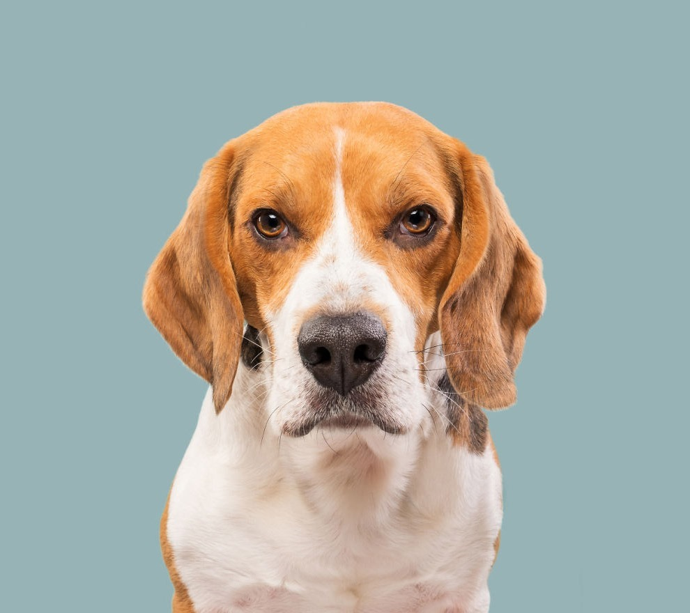 позитив Фотография фотограф эмоции собаки уникальность ум Германия