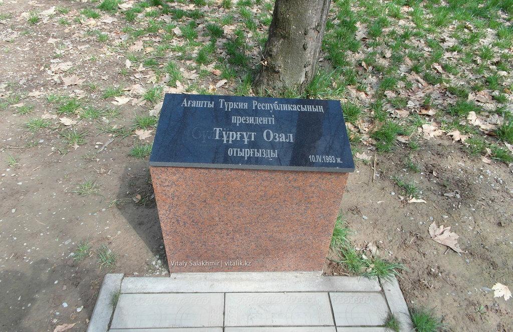 Дерево Тургут Озала, дендропарк Шымкента
