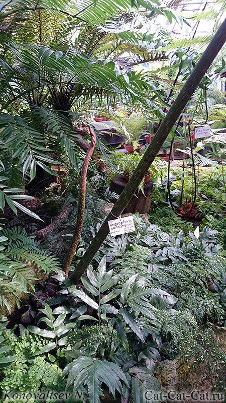 Папоротники оранжереи Санкт-Петербурга, ботанический сад