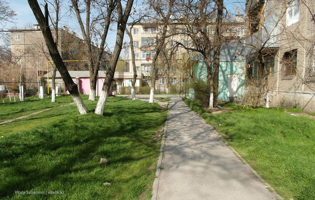Трава во дворе Шымкент
