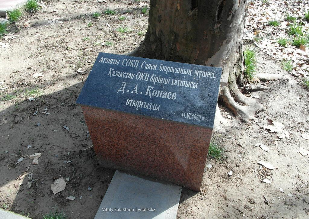Дендропарк Шымкента, дерево Кунаева