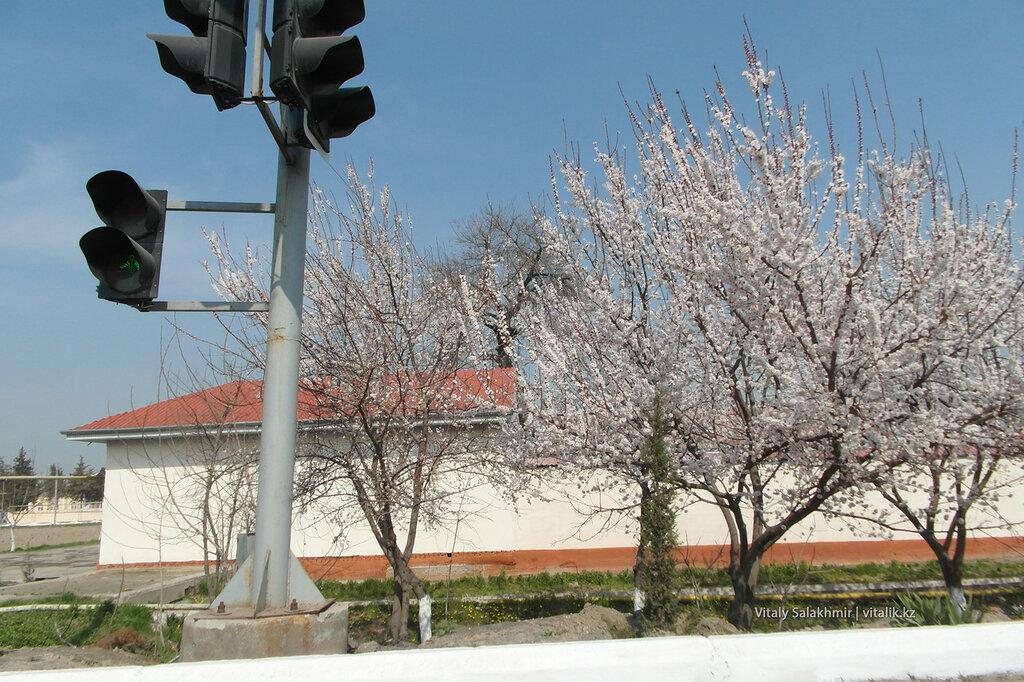 Ранняя весна в Узбекистане