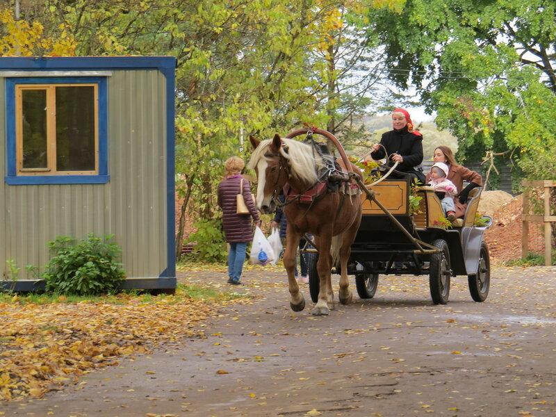 Катание на повозке в Витославлицах в Великом Новгороде