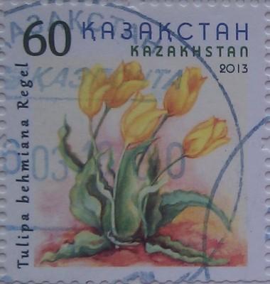 2013 цветы желт тюльпан 60