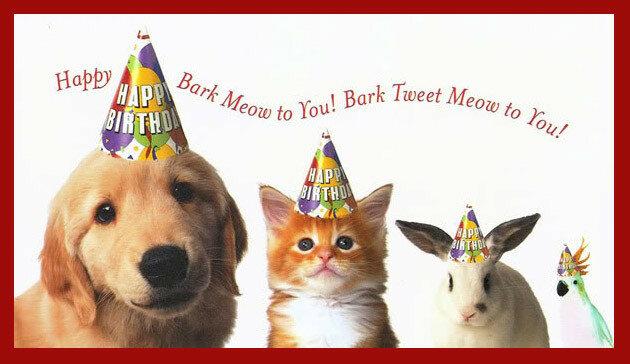 Открытка с днем рождения с собакой и котом