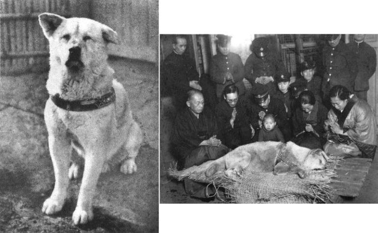 История настоящего Хатико (1 фото)