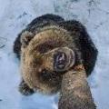 Медвешутка