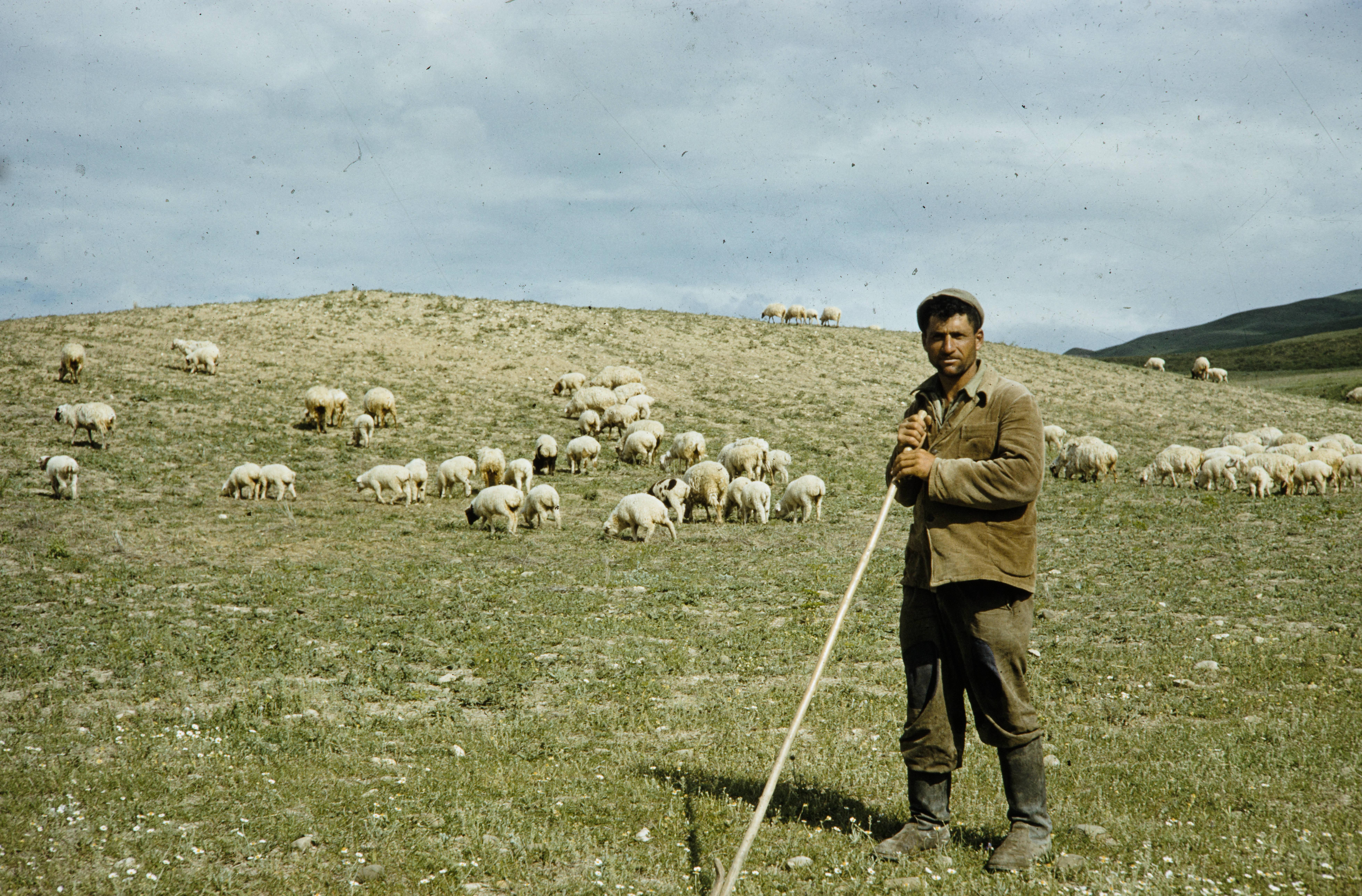 Пастух со стадом на склоне холма