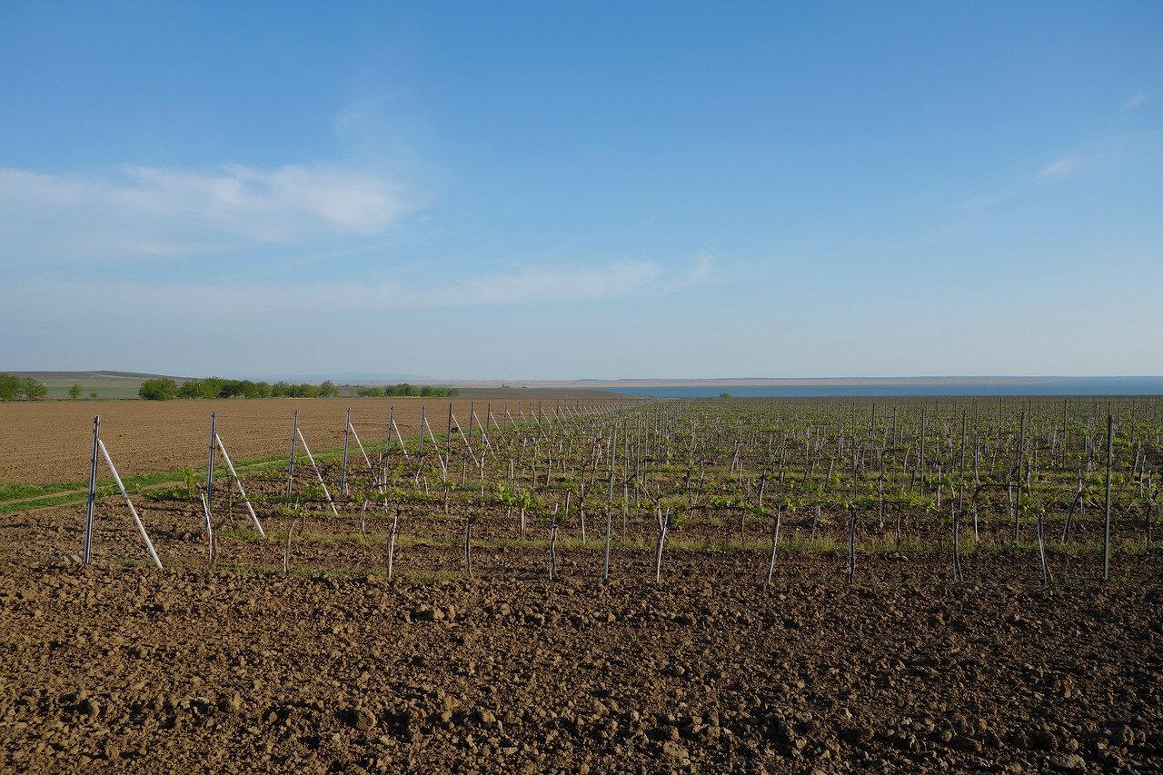 поля и степи таманские