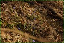 http://img-fotki.yandex.ru/get/110545/15842935.45c/0_f5212_d8c49436_orig.jpg