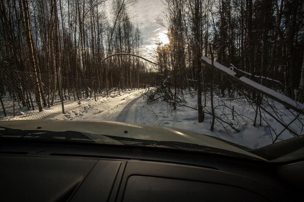 Оршинский мох Тверская область