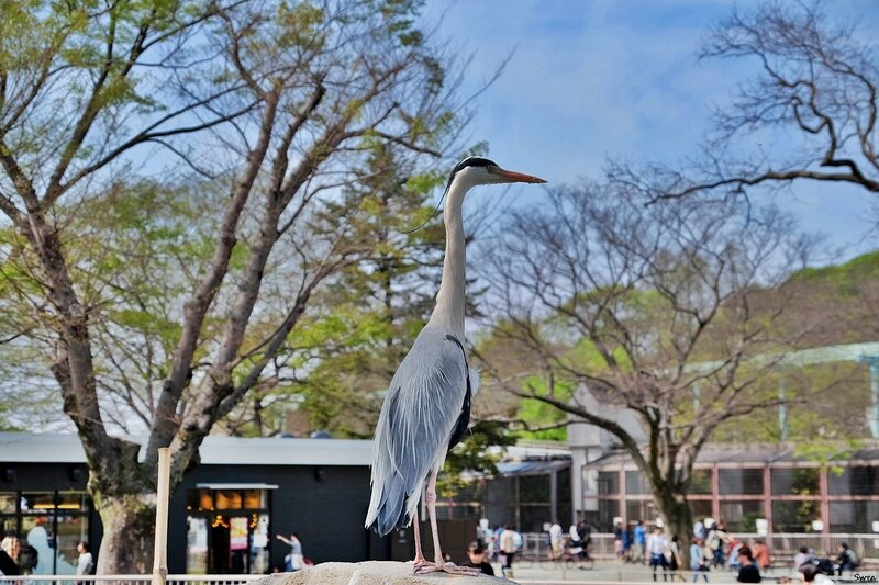 Зоопарк Нагоя Higashiyama Zoo