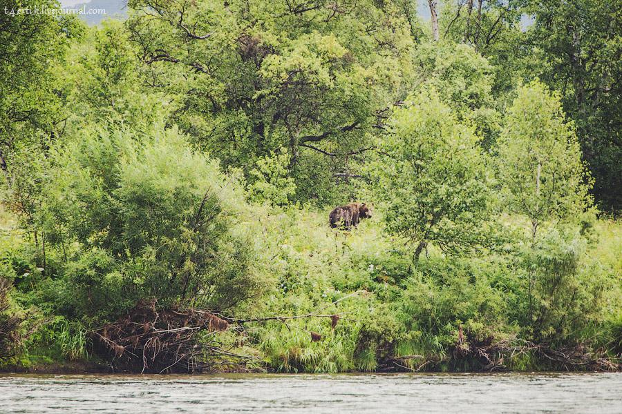 Итак, три часа в лодке ради трехминутной встречи с медведем. Кому-то везёт больше, кому-то&nbsp