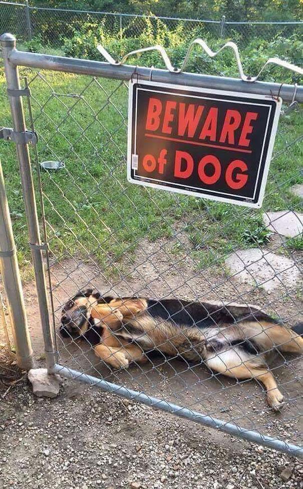 Осторожно! В этом посте жутко добрые собаки (14 фото)