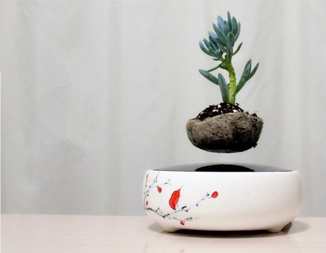 © life  Растения, которые парят ввоздухе, медленно вращаясь,— это удивительное сочетание при